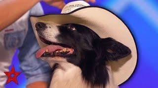 Dancing Cowboy DOG AMAZES The Audience On America's Got Talent 2019! | Got Talent Global