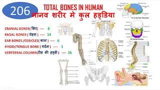 Total number of bones in human body   BEST TRICK TO LEARN 206 BONES IN HUMAN BODY    HUMAN SKELETON