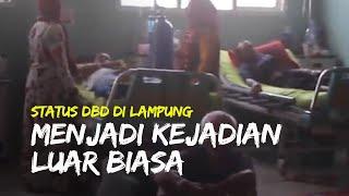 DBD di Lampung Tengah kini Berstasus 'Kejadian Luar Biasa', Ada 402 Kasus