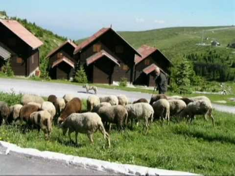 Sharr mountain beauties-Shipkovica