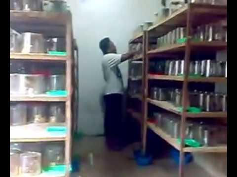 Video Beternak Kroto Dalam Toples