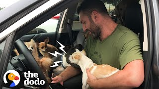 Snarling Rescue Chihuahua Becomes A Daddy's Boy  | Ruff Life With Lee Asher by The Dodo