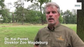 Zoo Magdeburg nach dem Sturm