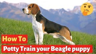 How To Potty Train A Beagle Puppy? Easiest Technique Method Possible
