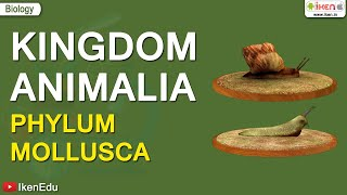 CH05-DIVERSITY IN ANIMAL KINGDOM-PART06-MOLLUSCA