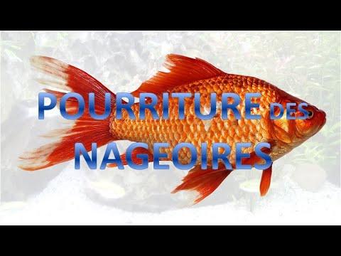 Les parasites habitant dans les aquariums