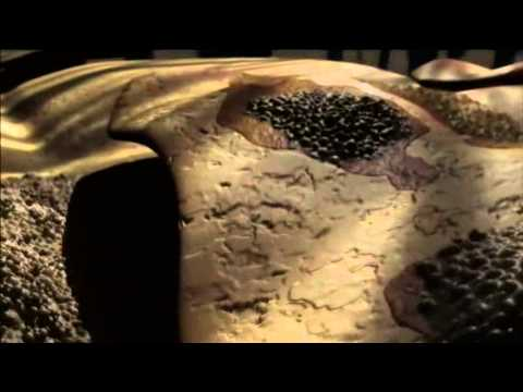 Bei welchen Würmern die schwarzen Larven