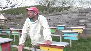 Отвечаем на вопрос о ранних пчеломатках 17.04.2019