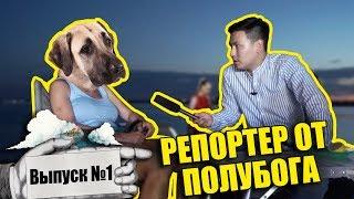 Репортер от полубога #1 - СКРИПТОНИТ поет про собак | Какая собака станет Акимом?