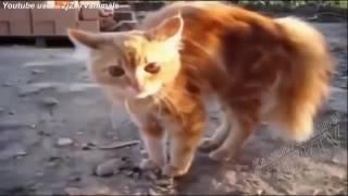 ХА ХА ХА РЖАЧ !Приколы с животными ноябрь 2017