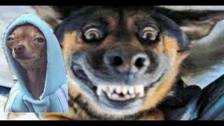 Laugh with animals / Mit Tieren lachen