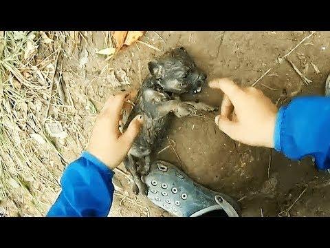 Die Würmer nach der Aufnahme nemosola