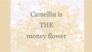 Magical Plants: Camellia