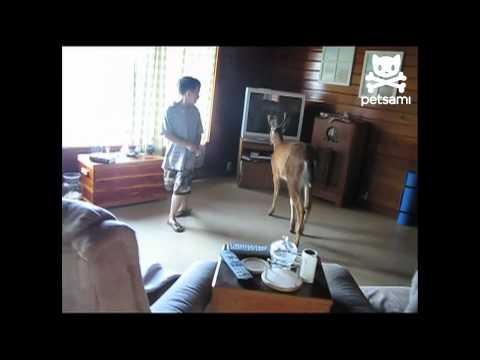 ביקור מפתיע של חיה בבית!