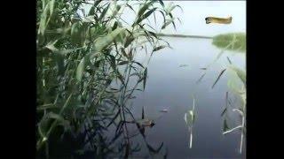 Рыболовные базы рыбалка в дельте волги