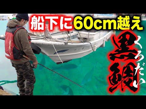 , title : '【衝撃】60オーバーの黒鯛が大量発生している港で釣り!【奄美大島遠征 #4】