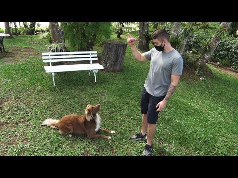 Adestramento de cães pode ser feito em casa com truques simples