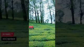 Kerala FPV Drone Freestyle @Munnar Tea Plantation I RG FRMAES  