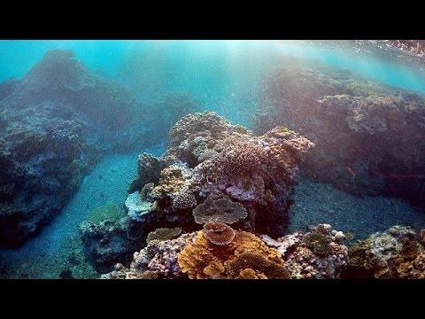 Αυστραλία: Σοβαρή απειλή κατά του Μεγάλου Κοραλλιογενούς Υφάλου
