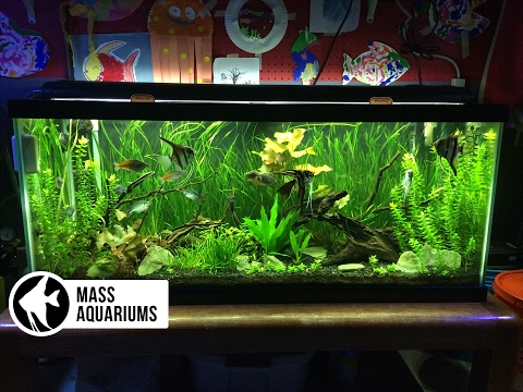 How to set up a Freshwater Aquarium: Beginners guide to your 1st Aquarium