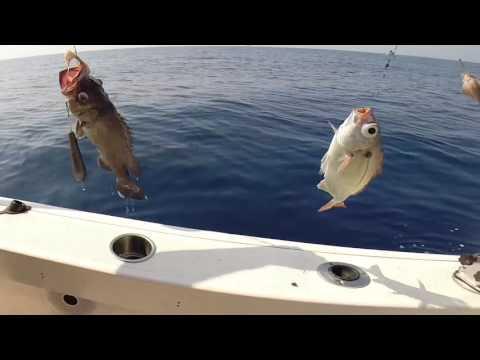 Laffitto di piano gestionale dellimpresa di uno stagno per pesca