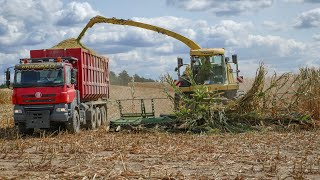 Silage 2018 - Krone BIG X770, John Deere 8370R, 3x Case IH Puma, 2x Tatra agro, 4x Krone trailer