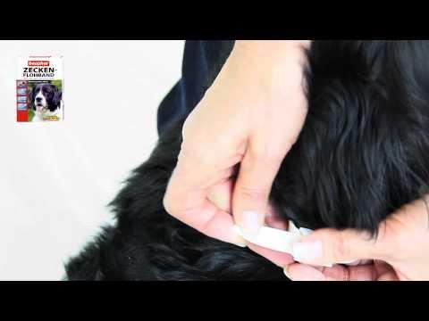 Beaphar Zecken- & Flohhalsband Hund Anwenderfilm / Tutorial.mp4