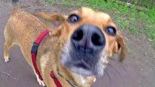 preview picture of video 'Hundewiese Ketsch, 01.02.2014 - GoPro'