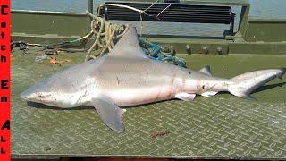 BULL SHARK Caught in FRESHWATER RIVER!