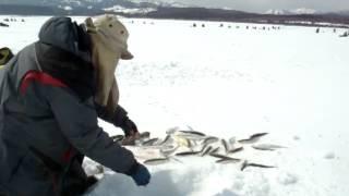 Рыбья кожа для ловли корюшки