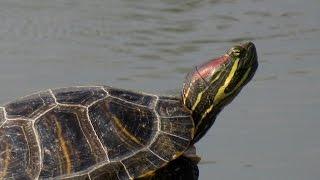 Где обитает черепаха в какой природной зоне