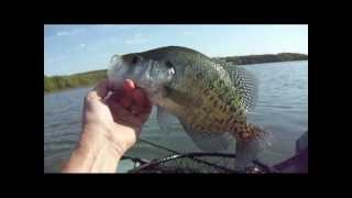 Spinnerbait and Spro Phat Fly Crappie
