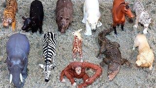 Aprende los Animales y Colores en Arenero! Video Educativo para Niños y Bebés!