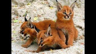 Top 10 Most Beautiful Cat Breeds