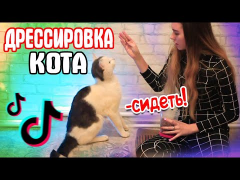 ДРЕССИРОВКА КОТА | Команды Сидеть и Поцелуйчик / Снимаю кота в TIK TOK