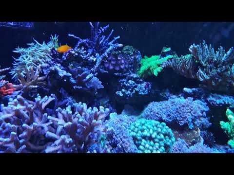 Progression of Reef (part 22)