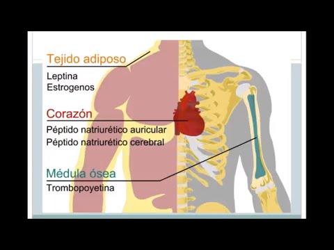 La medicina herbal en el tratamiento de la hipertensión