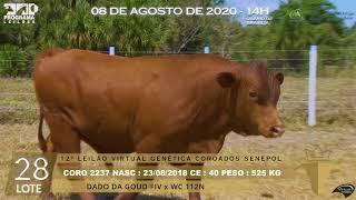 Coro 2237 b4 fiv