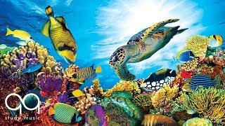 Aquarium Music for Deep Focus 》STUDY MOTIVATION 》Improve Concentration