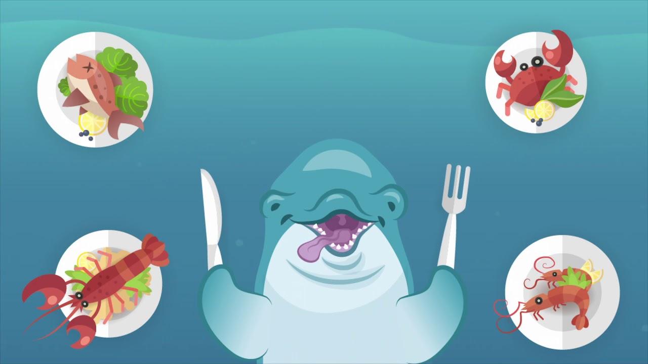 Dolfijnen in het wild en in gevangenschap