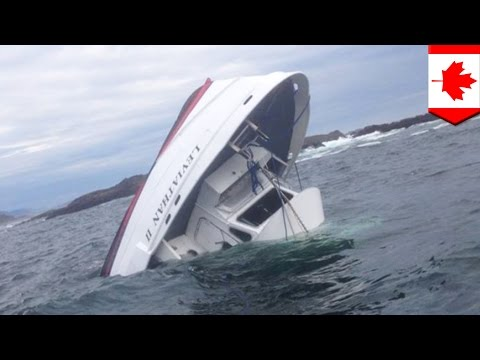 Whale-watching ship sinks: four dead and many injured after Canadian vessel sinks - TomoNews