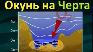 Диалоги о рыбалке зимняя рыбалка на окуня