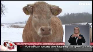Turcijā ir pieprasījums pēc Latvijā audzētiem gaļas liellopiem
