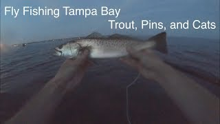 Fly Fishing Tampa Bay: Trout, Pins, and Cats 10/21/2019