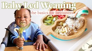 Baby Led Weaning || The Basics For Beginners!