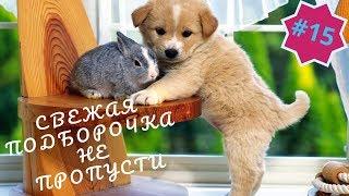 Приколы про животных  Смешное видео про котов, собак и не только  Такого Вы еще не видели! Выпуск 15