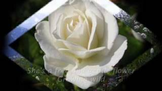 Wildflower   Song By Skylark (lyrics)