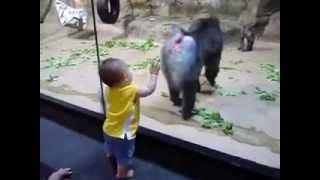 Мандрилл против малыша