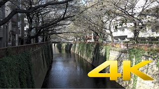 Nakameguro - Tokyo 中目黒 - 4K Ultra HD