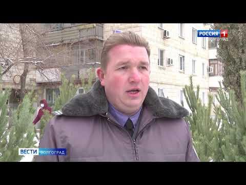 Управлением Россельхознадзора проведены контрольно-надзорные мероприятия на елочных базарах города Волгограда